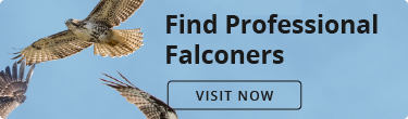Find Professional Falconers. Visit now.